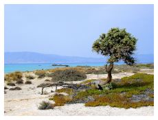 Chrissi island - Kreta zonvakantie - strand. bron: trekearth.com