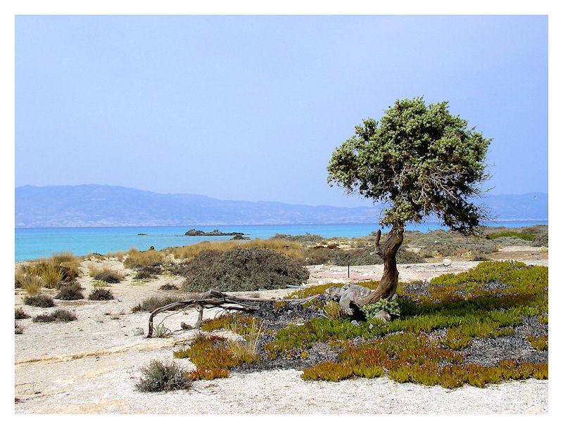 Chrissi island – Kreta zonvakantie – strand. bron: trekearth.com