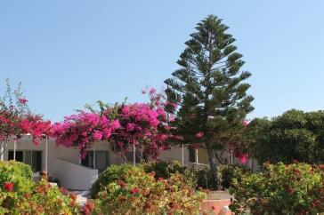 bloemen zonvakantie milos griekenland cycladen