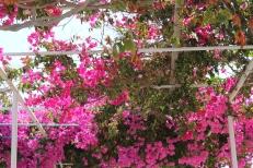 bloemen fauna milos