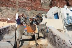 met de ezel omhoog _ Santorini zonvakantie