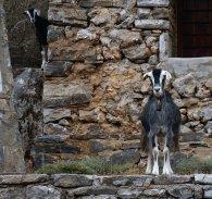 berg geiten kreta zonvakantie