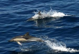 delfinia santorini zonvakantie