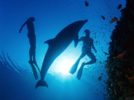 Diving with dolphins santorini zonvakantie duiken snorkelen