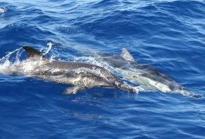 dolphins duiken snorkelen kos zonvakantie griekenland