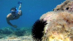 maxresdefault samos duiken snorkelen zonvakantie griekenland