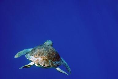Scuba Greece5 santorini zonvakantie duiken en snorkelen