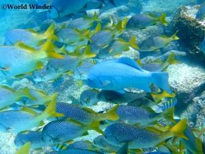 snorkeling-in--zonvakantie griekenland