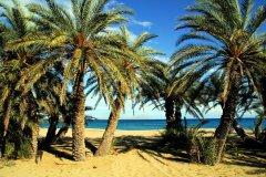 vai beach palmenstrand vakantie kreta griekenland 3